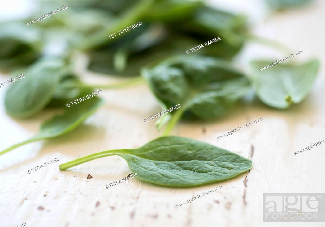 Stock Photo: Studio shot of baby spinach.