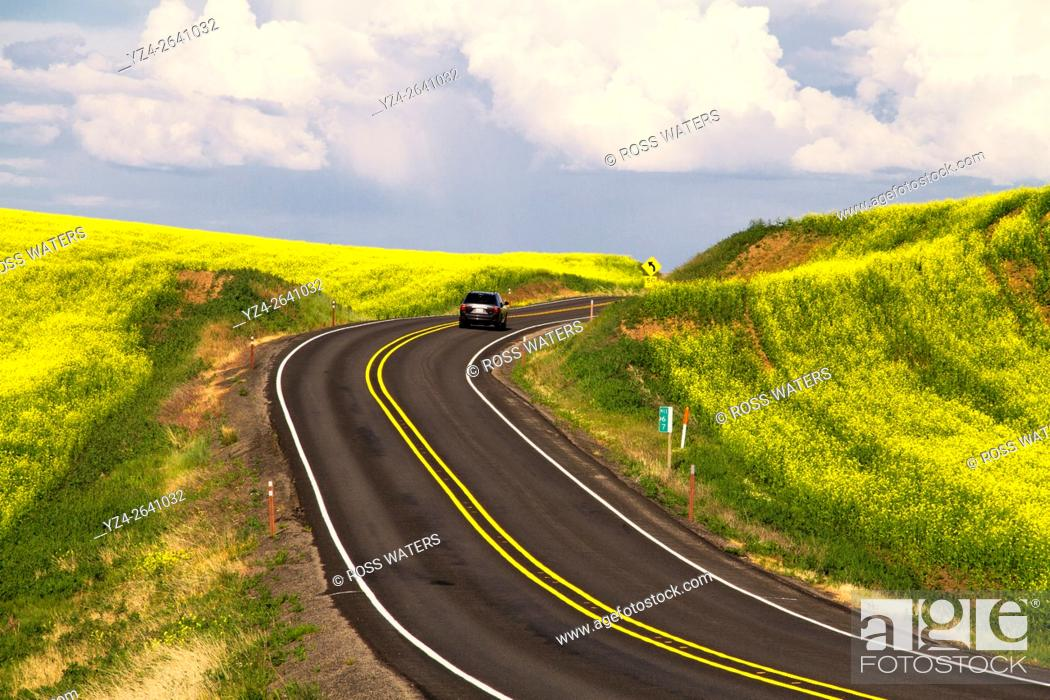 Stock Photo: Rural highway through a canola field in the Palouse, eastern Washington, USA.