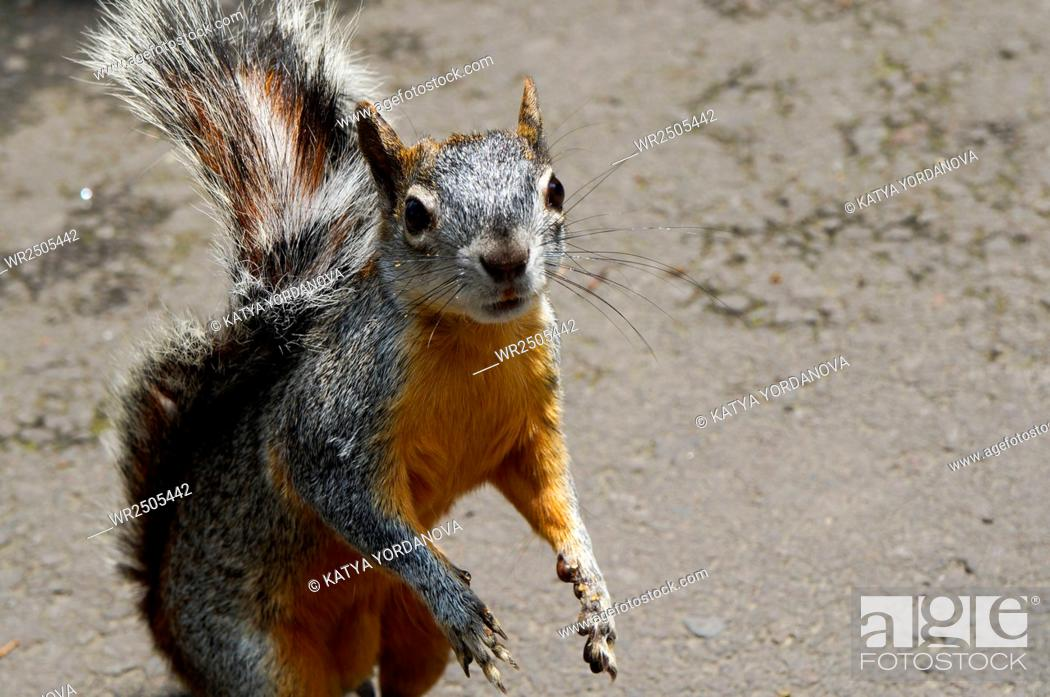 Stock Photo: Squirrel.