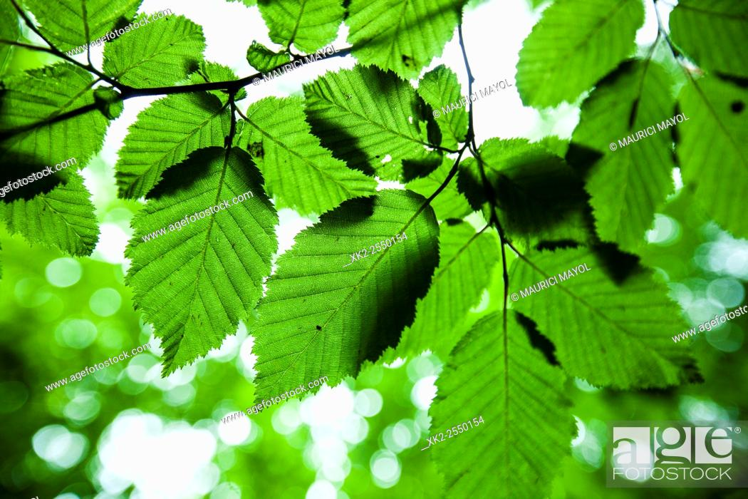 Stock Photo: close up of leaves.