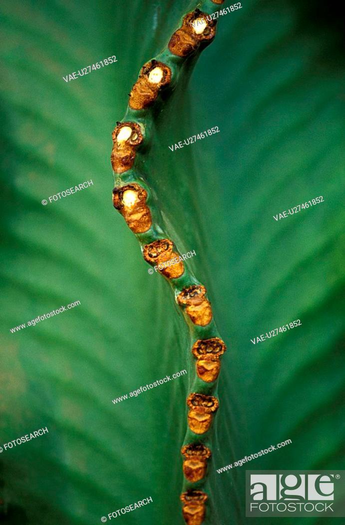 Stock Photo: close, background, cactus, cacti, cactaceae, andreas.