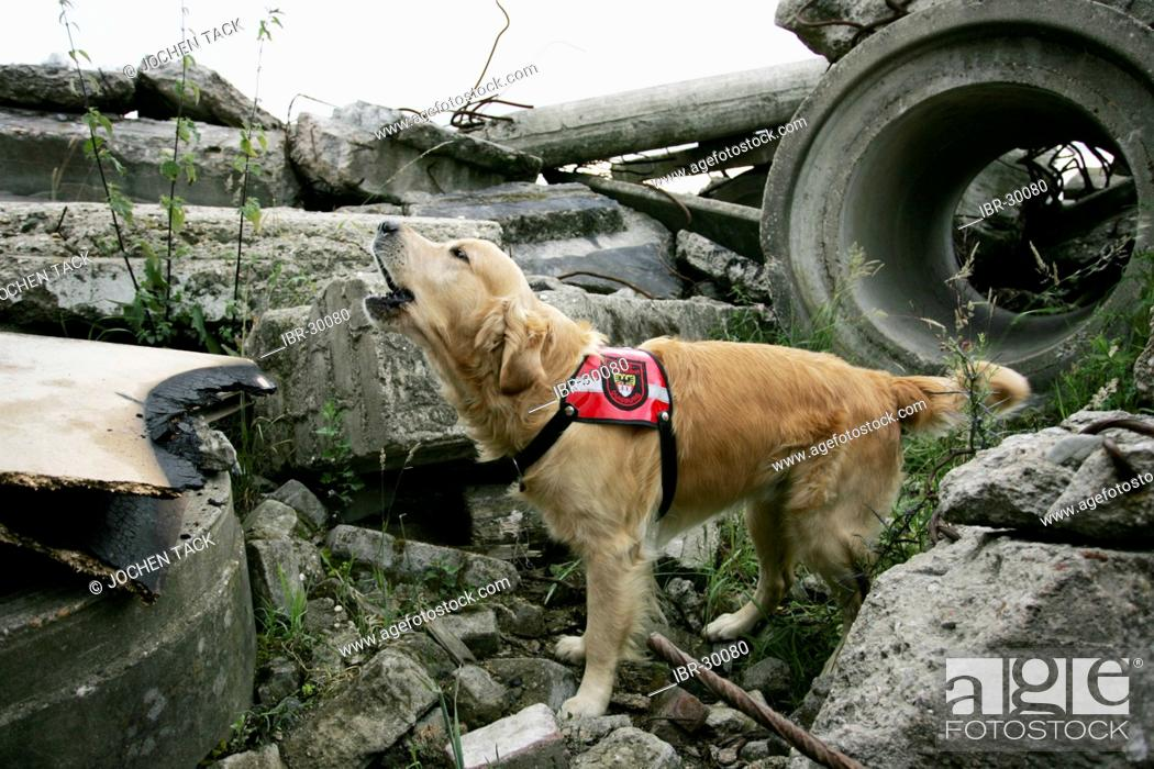 DEU, Federal Republic of Germany, Duisburg: Rescue dogs of the fire