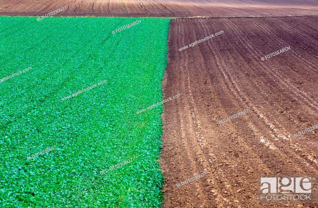 Stock Photo: A field half plowed.