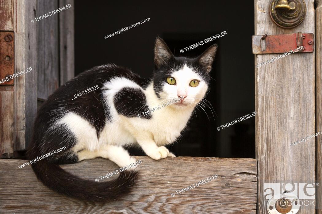 Stock Photo: Domestic cat (Felis catus). Resting at an open window. Trinidad, Cuba.