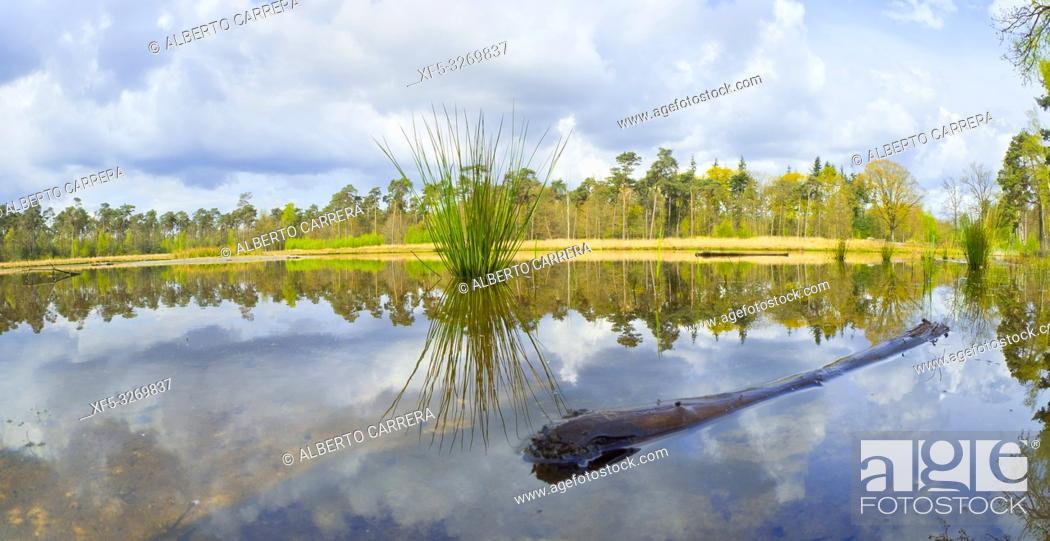 Photo de stock: Mastbos Forest, Breda, Noord-Brabant Province, Holland, Netherlands, Europe.