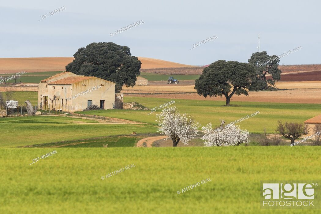Stock Photo: Farmhouse and green sown fields. Corral Rubio. Albacete province. Spain.