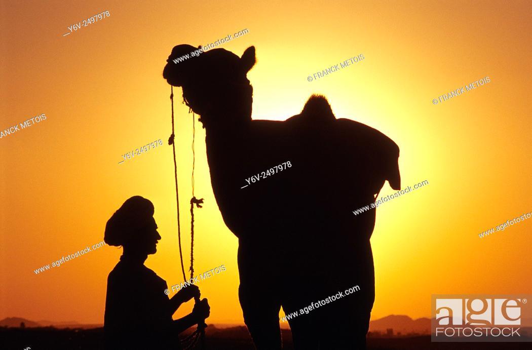 Stock Photo: Dromedary and farmer at Pushkar ( Rajasthan, India).