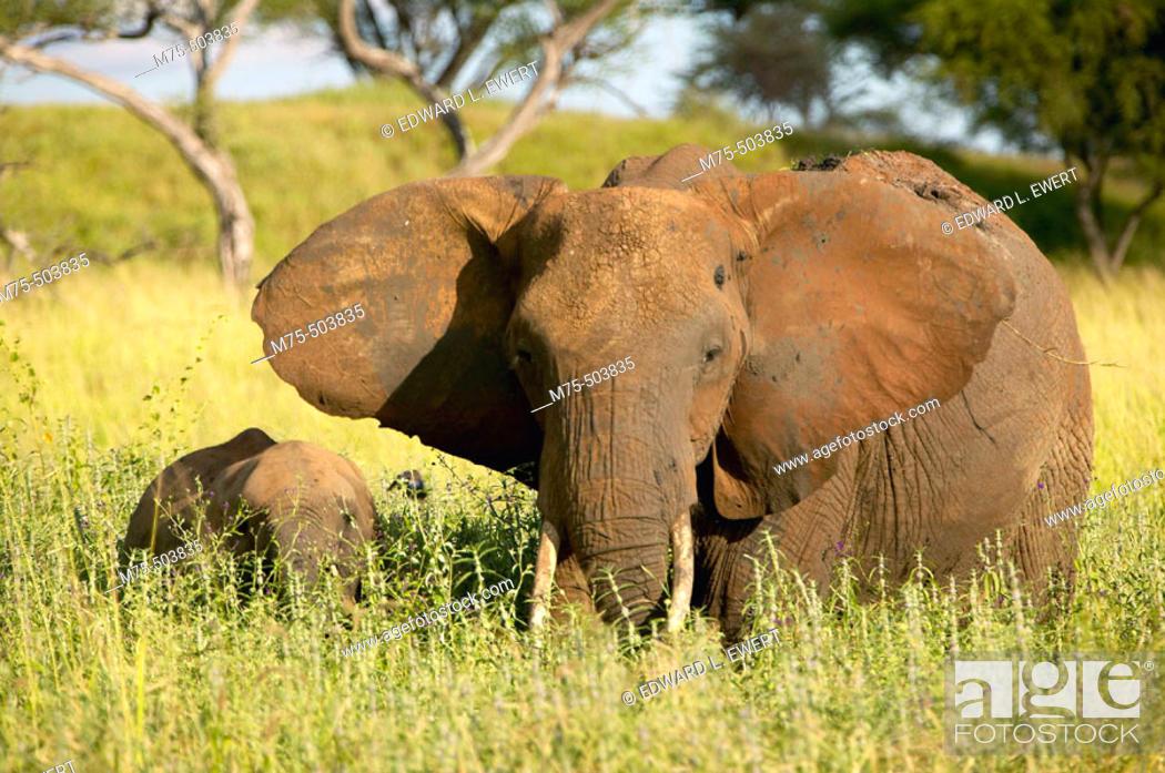 Stock Photo: Tarangire National Park, Tanzania.