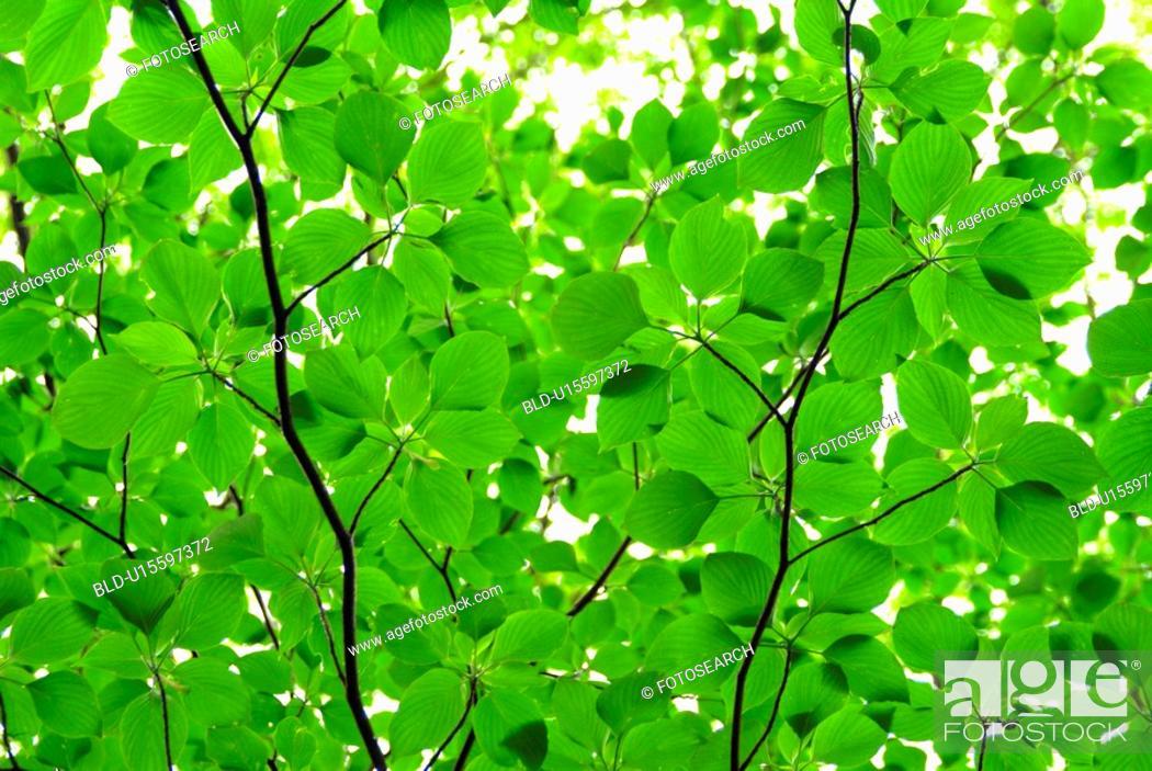 Stock Photo: Verdure.