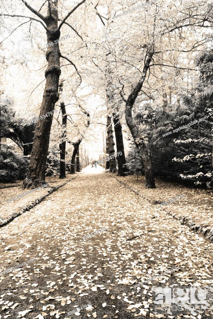 Stock Photo: Simulated infrared photo of autumn foliage in Terra Nostra Park. Furnas, Azores islands, Portugal.