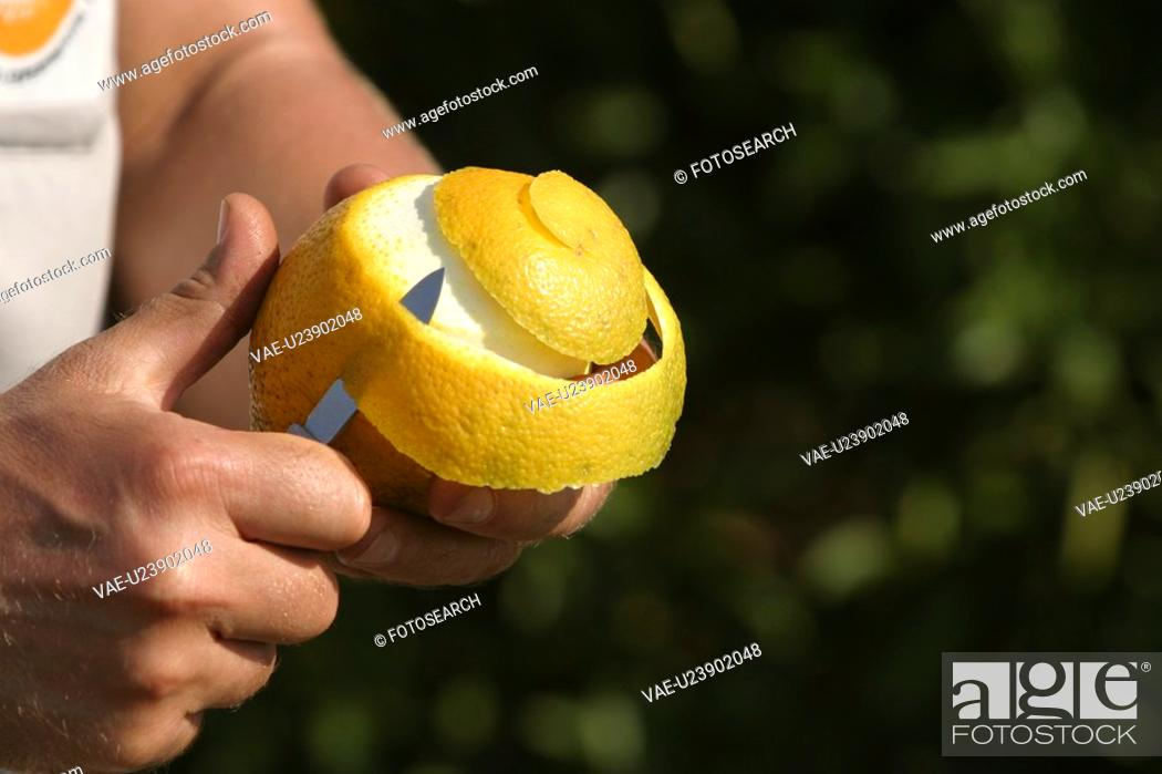 Stock Photo: peeling, fruit, human hands.