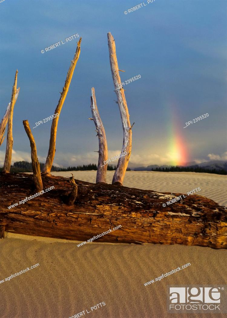 Stock Photo: Driftwood on the sand with a rainbow in the distance; Lakeside, Oregon, United States of America.
