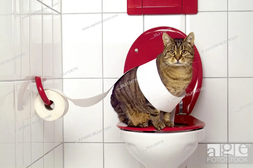 Stock Photo: tabby domestic cat on toilet - funny.