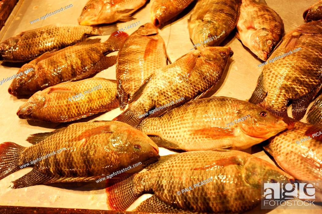 Stock Photo: tilapia fish, night market, bangkok, thailand.