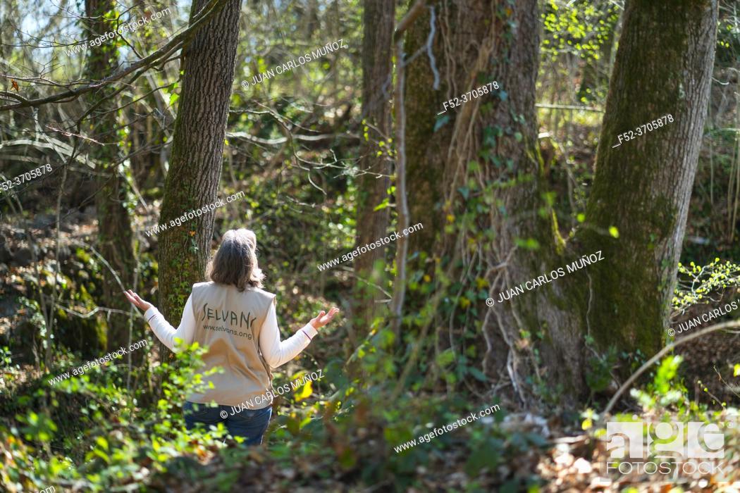Photo de stock: Spending time in forest, Nature therapy, therapeutic forest, Sant Cristòfol de les Fonts village, La Garrotxa region, La Garrotxa Natural Park, Girona Province.
