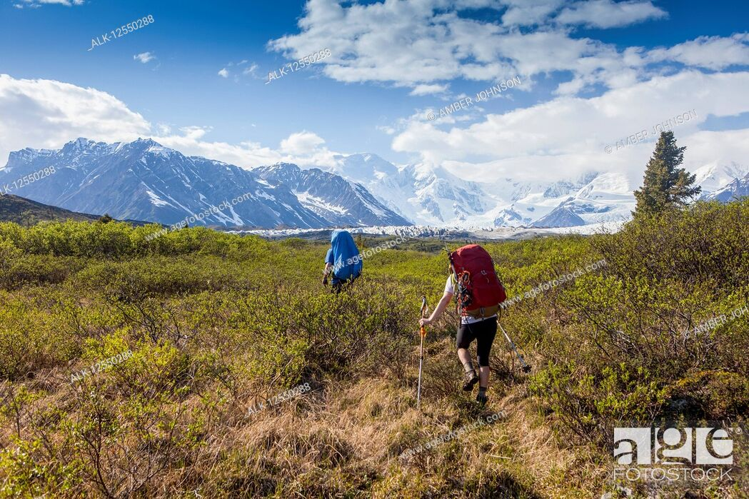 Stock Photo: Man and woman backpacking on a sunny, summer day through brush on the Donoho Lakes Loop, with Wrangell Mountains and Kennicott Glacier in the background.