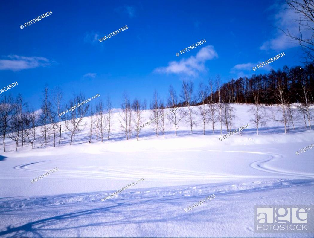 Stock Photo: snow, snow scene, tree, season, winter, winter scene.