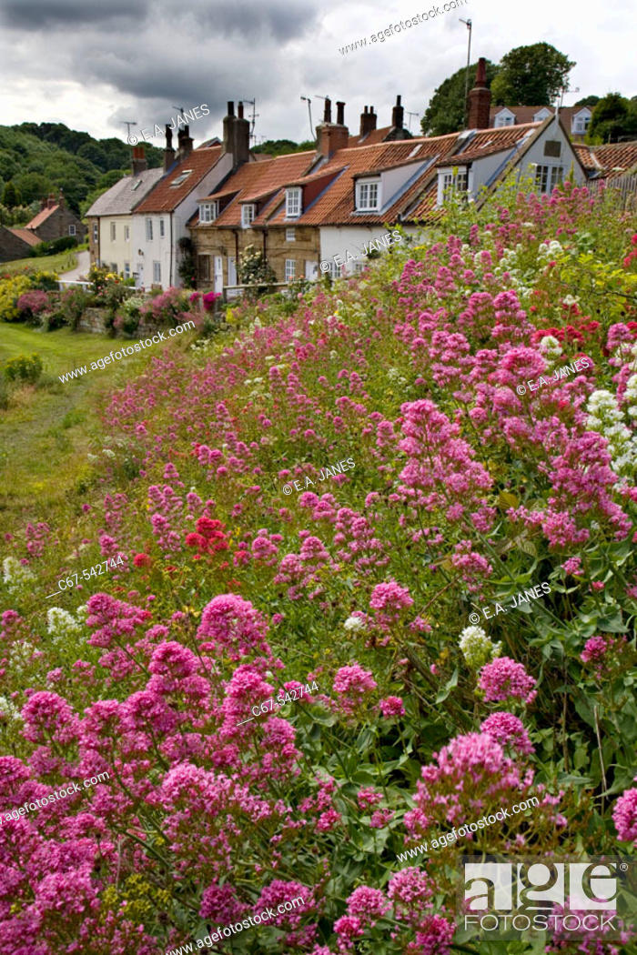 Stock Photo: Cottages Sandsend Whitby North East Yorkshire UK July.