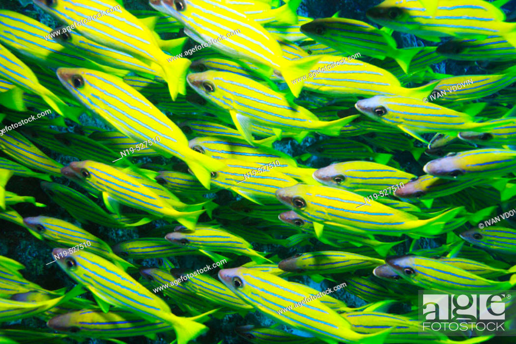 Stock Photo: Maldives Island, Indian Ocean.