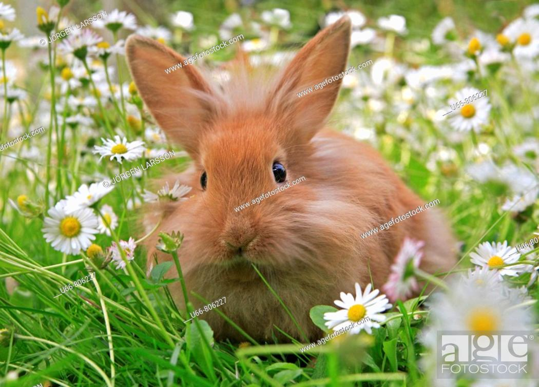 Stock Photo: Rabbit in the grass.