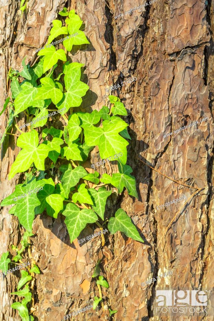 Stock Photo: Old tree bark texture with green plant.