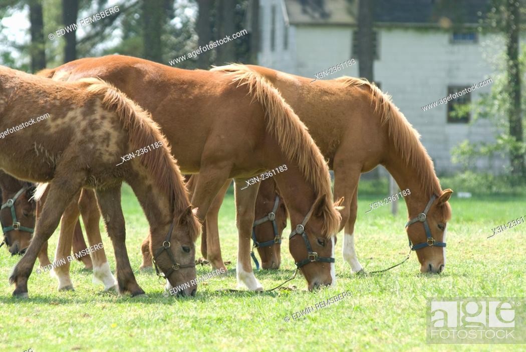 Stock Photo: Three Horses in a row.