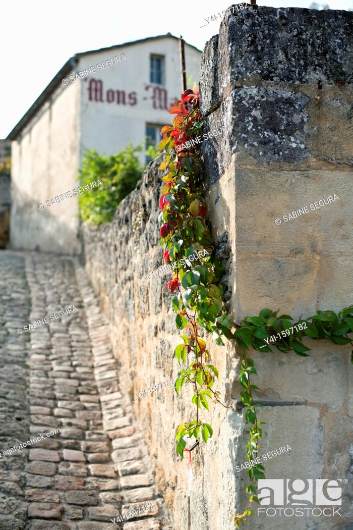 Stock Photo: wall and virginia creeper in Saint-Émilion  Gironde  Aquitaine France.