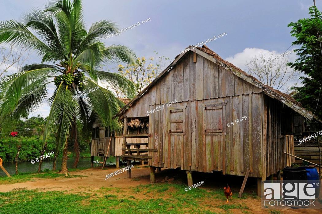 Stock Photo   Wooden Stilt House In Tropical Rainforest, Honduras, La  Mosquitia, Las Marias