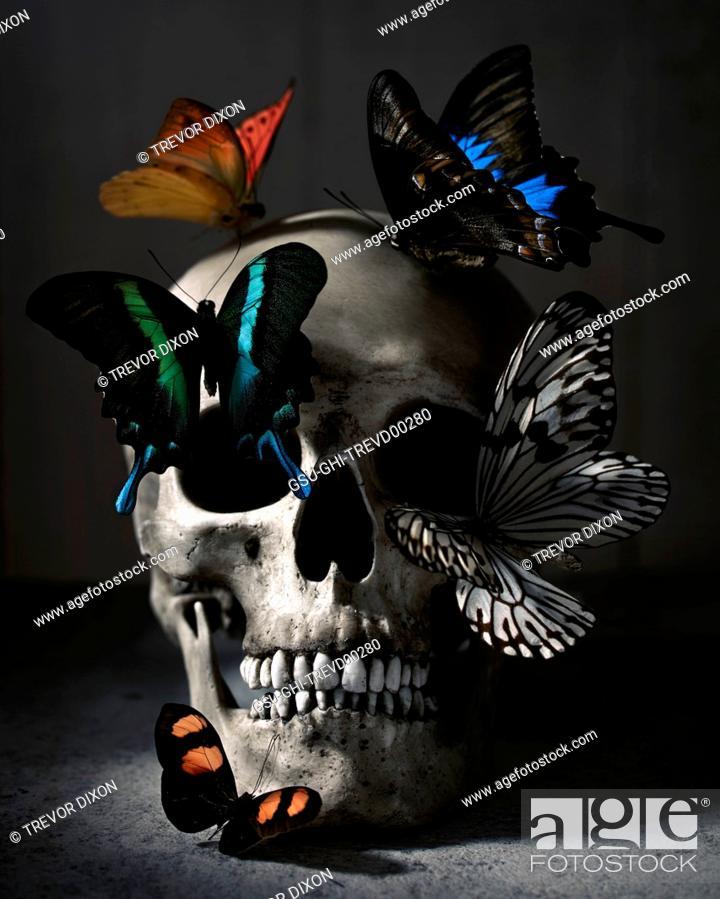 Stock Photo: Human Skull and Butterflies.
