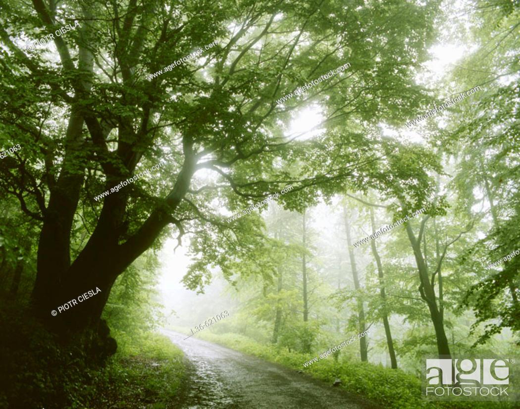 Stock Photo: Misty morning.