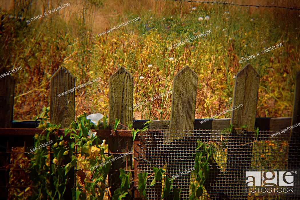 Stock Photo: Picket fence with flowers growing on it, in Heerlen in the province of Limburg in the Netherlands. Shot with Holga lens for selective focus.