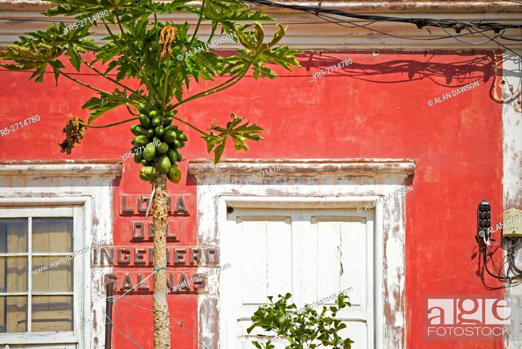 Stock Photo: Papaya tree growing outside old house in Las Palmas, Gran Canaria, Canary Islands, Spain.