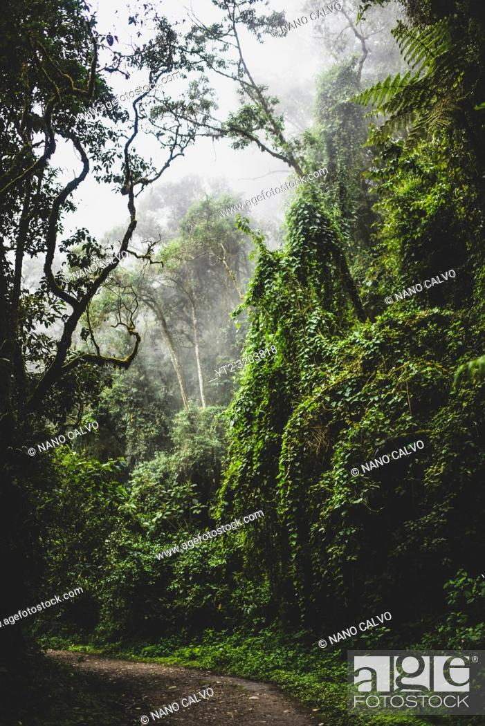 Stock Photo: The Cocora Valley (Spanish: Valle de Cocora) is a valley in the department of QuindÌo, just outside the pretty little town of Salento.