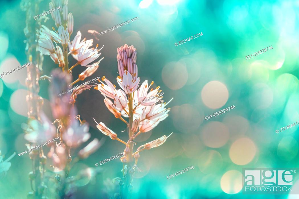 Stock Photo: Close-up shot of the beautiful flowers. Suitable for floral background.