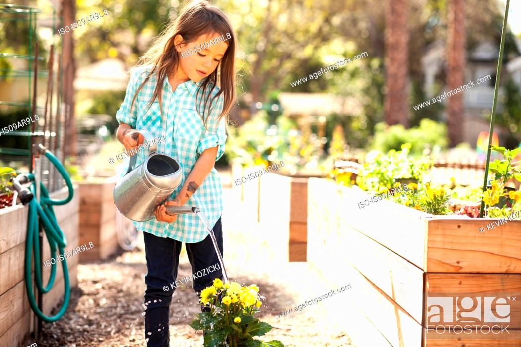 Stock Photo: Girl watering flower plant in community garden.