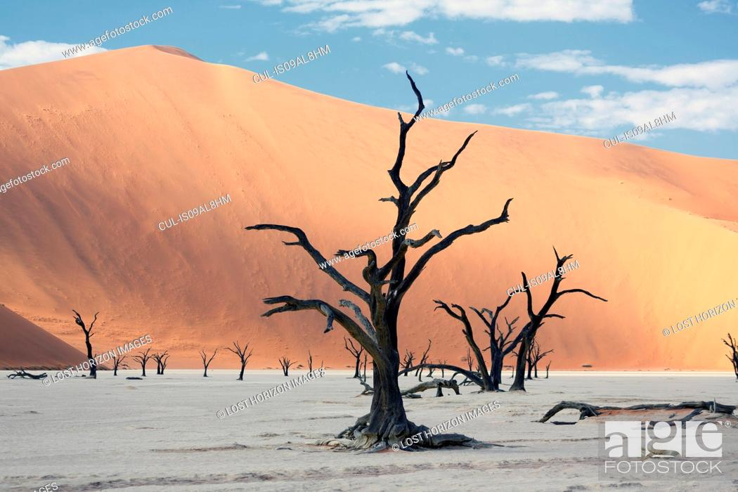 Stock Photo: Silhouetted dead trees on clay pan, Deaddvlei, Sossusvlei National Park, Namibia.