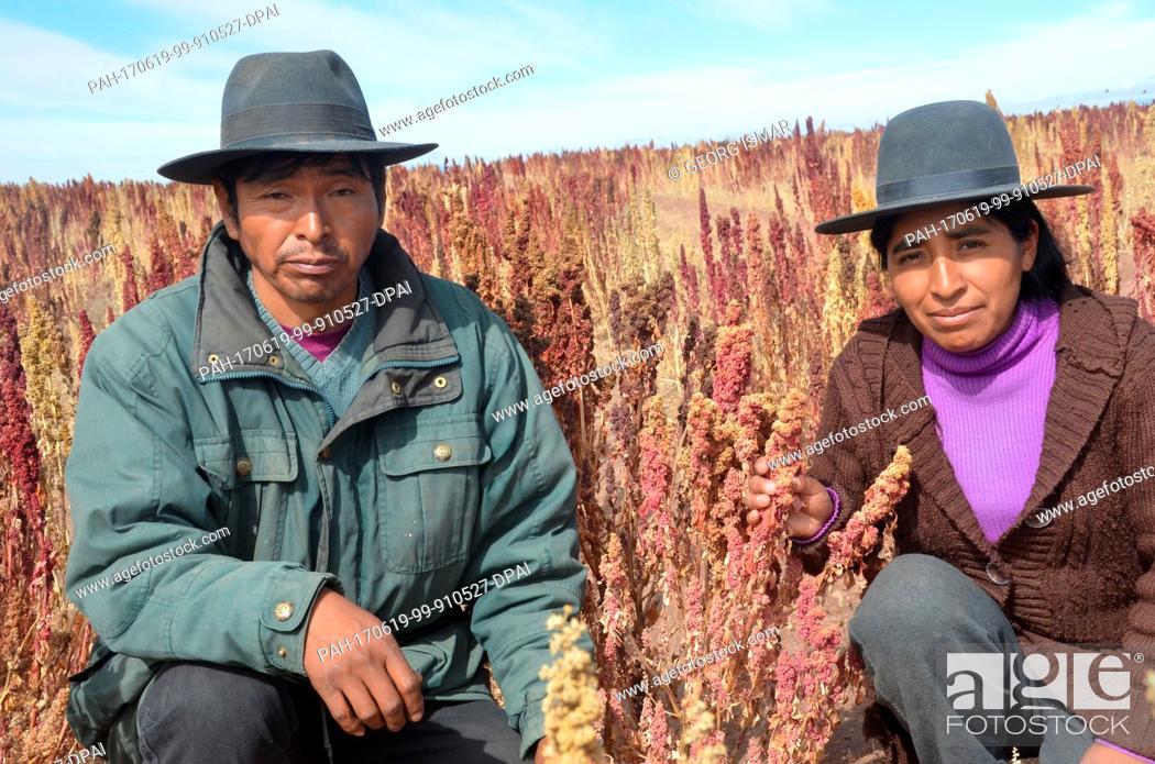 Stock Photo: Quinoa farmer Julian Canavari and his girlfriend Matilde Duran harvest red Quinoa near the town of Challapata, Bolivia, 27 May 2017.