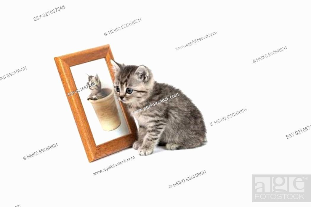 Stock Photo: junge Katzen.