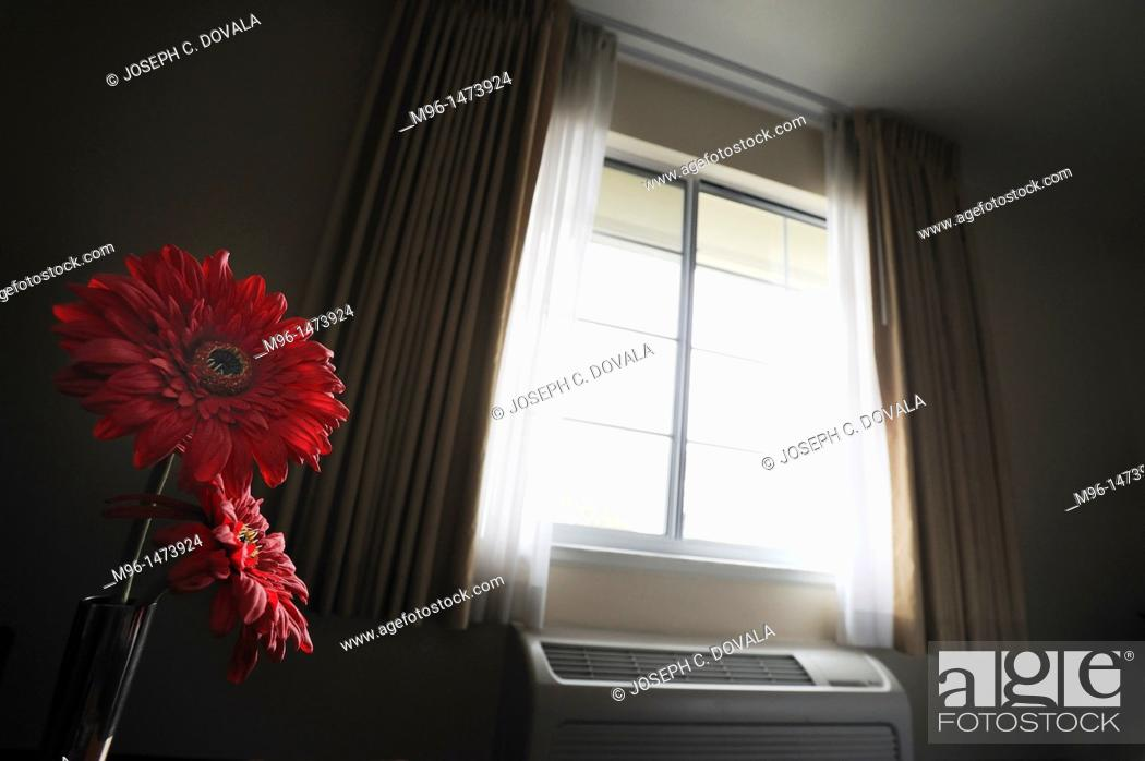 Stock Photo: Flowers by motel window light.