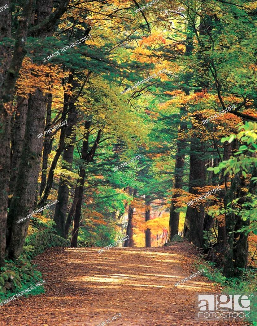 Stock Photo: avenue in autumn.