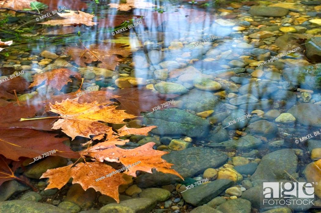 Stock Photo: Floating leaves on a river, Ason river, Cantabria, Spain.