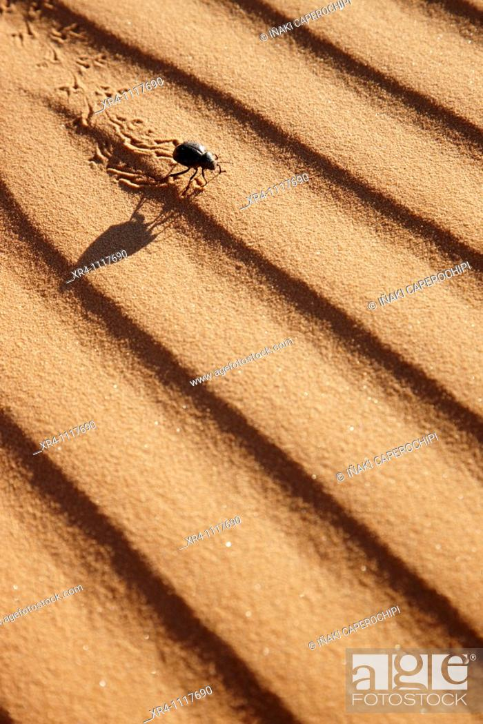 Stock Photo: Black desert beetle in sand, Wadi Tanezzouft, Ghat, Libia.