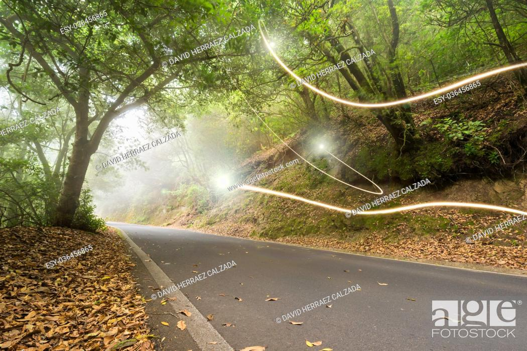 Stock Photo: Road in the magic forest, light trails through the myst, fairy tale scenary, version 2.