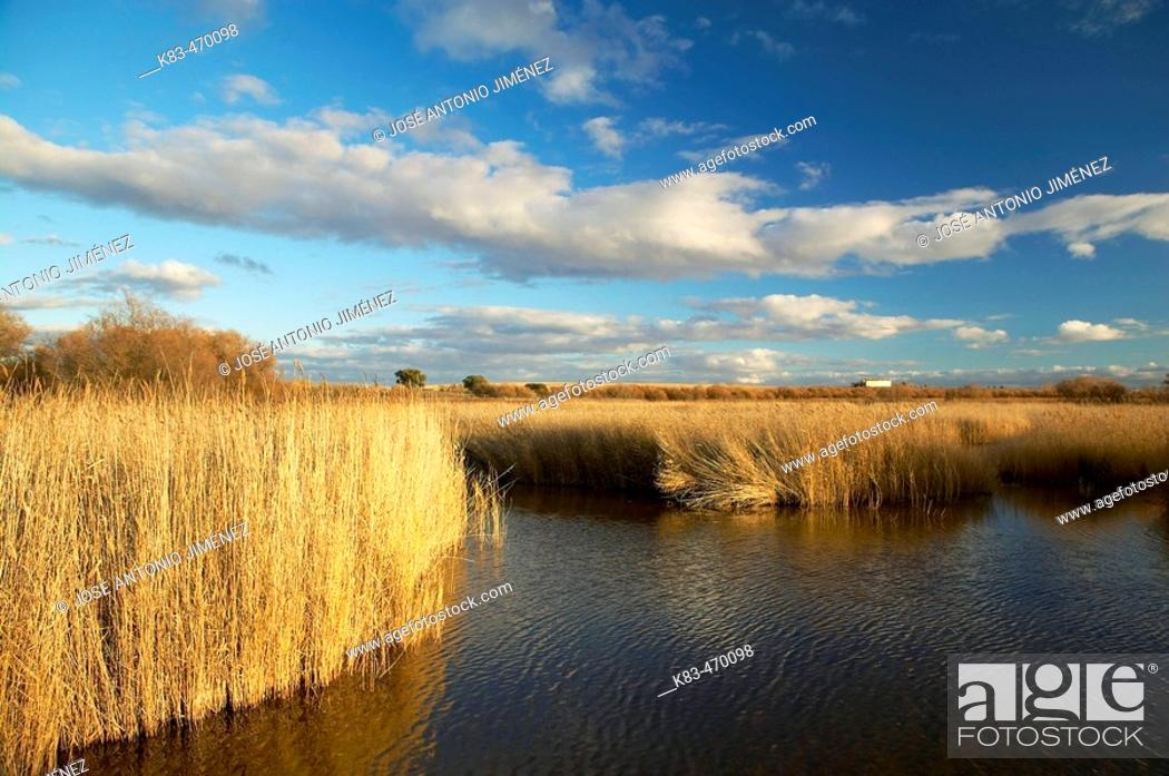 Stock Photo: Tablas de Daimiel National Park in Ciudad Real province. Castilla-La Mancha, Spain.