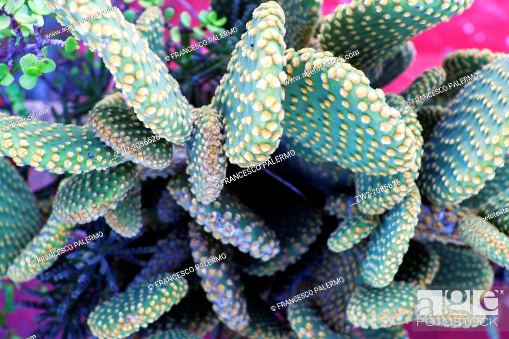 Photo de stock: Singular view of cactus. Guadalajara, Jalisco. Mexico.