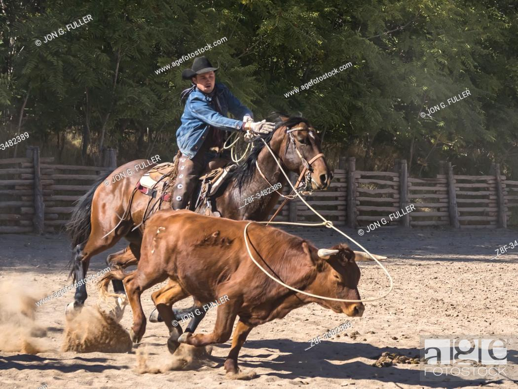 Imagen: An American cowboy roping a longhorn steer with a lariat or lasso on a ranch near Moab, Utah.