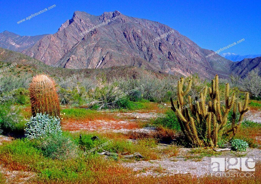 Stock Photo: Anza-Borrego Desert State Park CA.