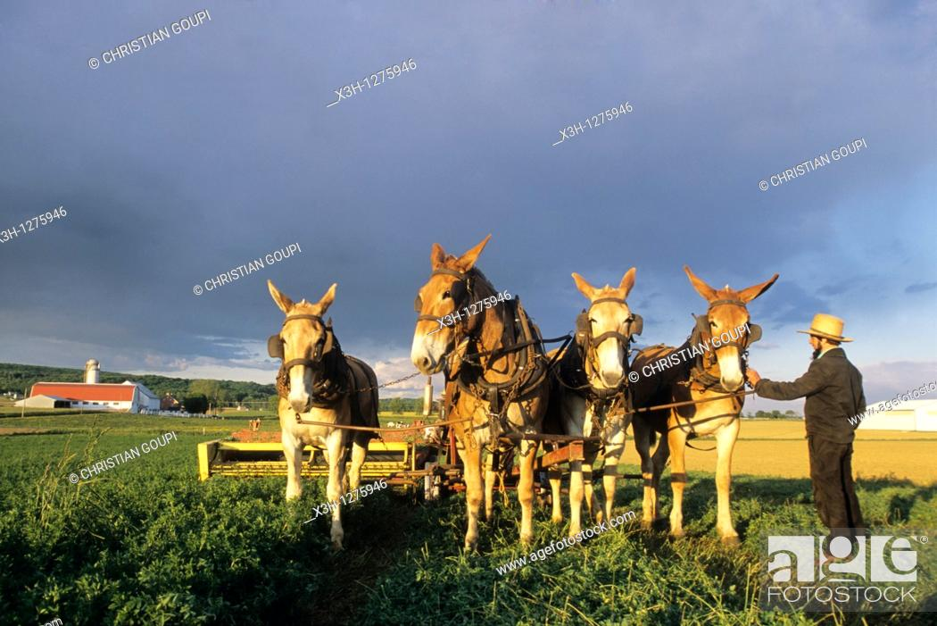 Stock Photo: Amish farmer at work in field, Lancaster County, Pennsylvania, United States.