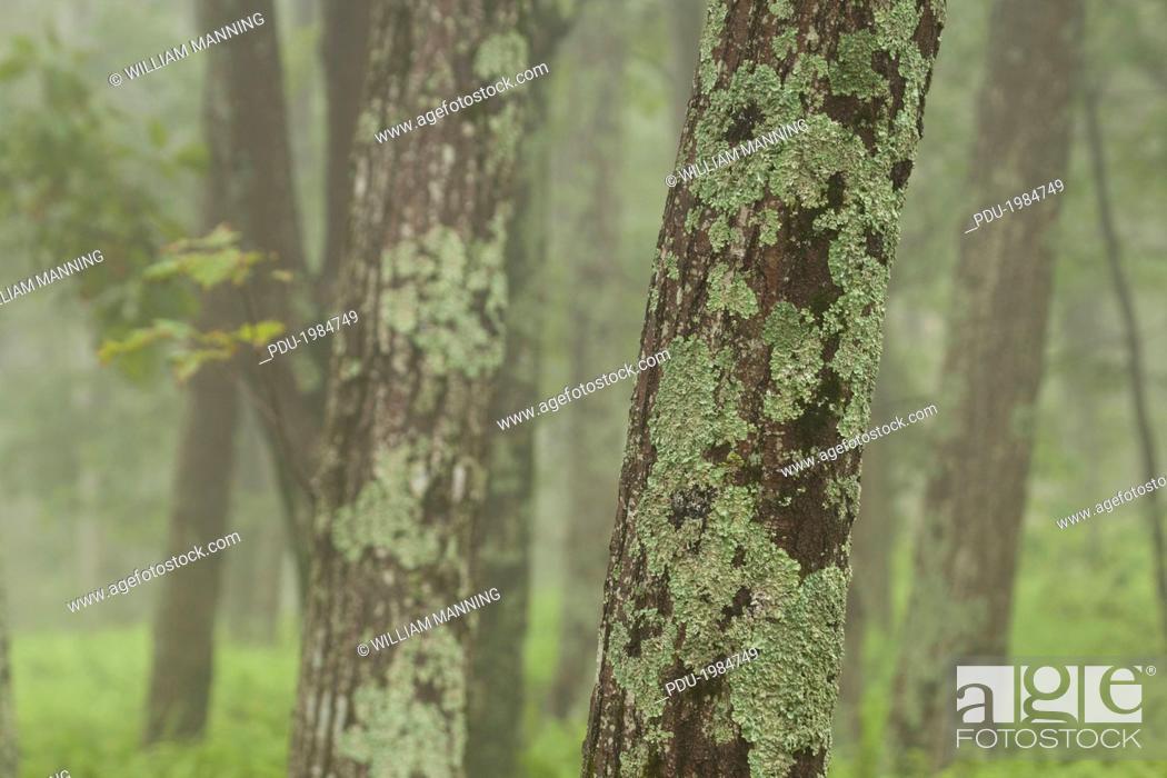 Stock Photo: Trees at Shenandoah National Park.