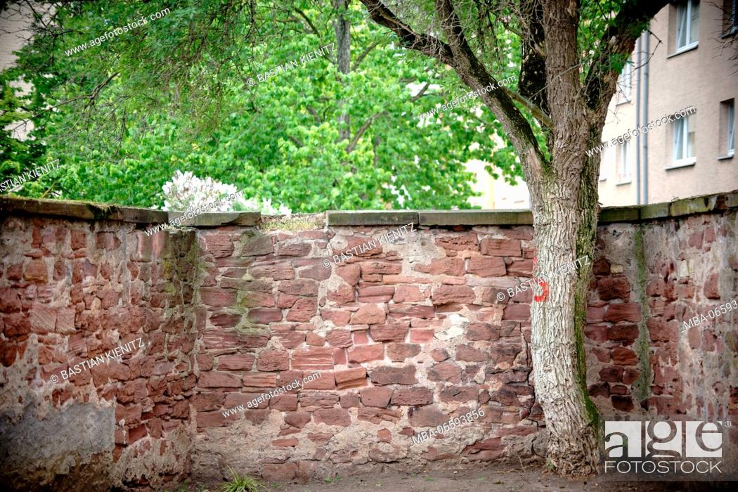 Stock Photo: A broad-leaved tree in a corner of a parking bay separated by a rustic wall,.